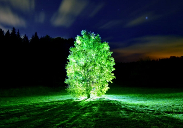 Glowing Plants Future of Streetlights