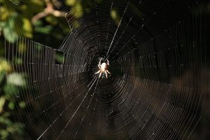 Spider silk in microphones | Spider Silk in Microphones