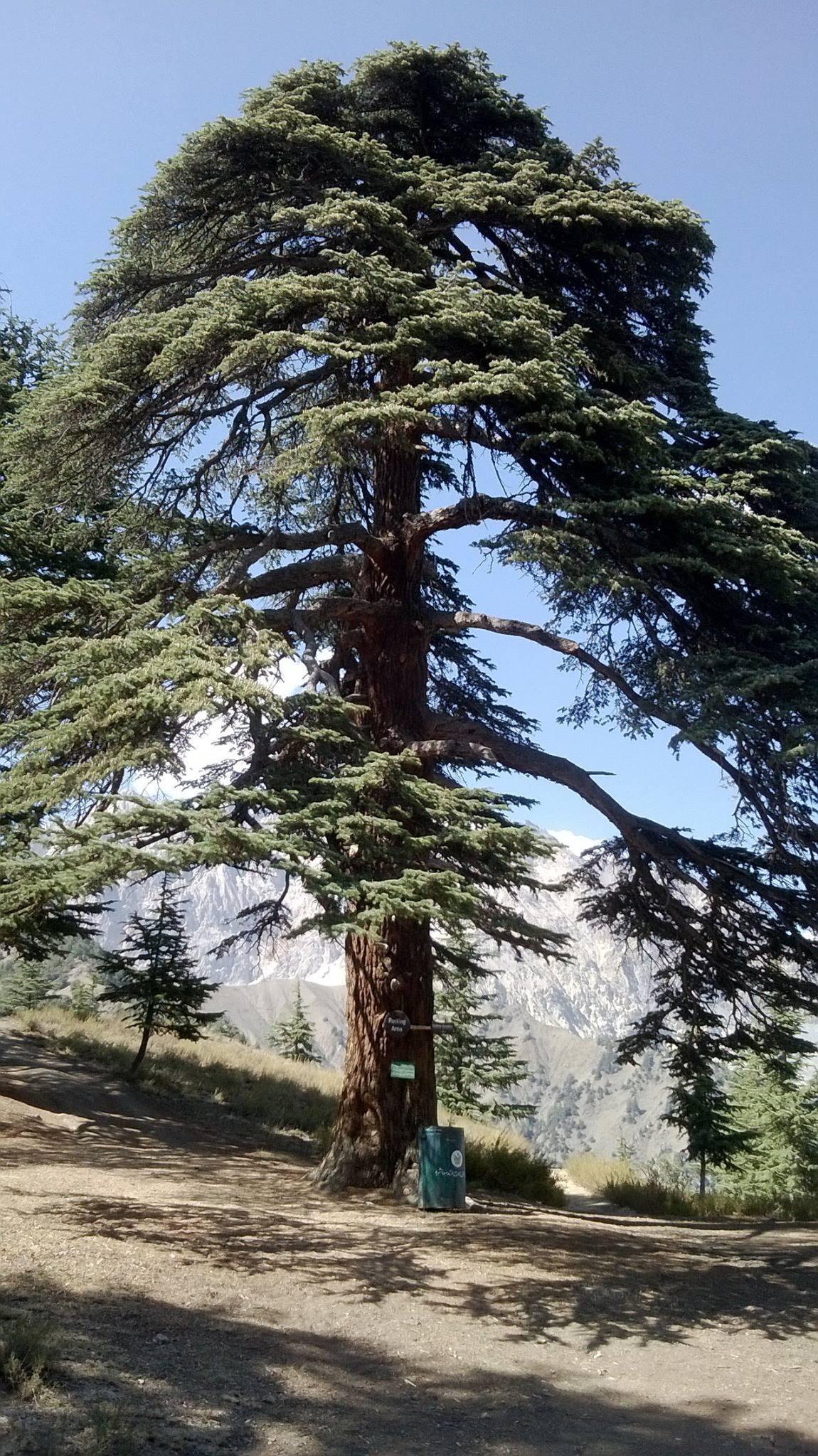 Chitral Gol National Park - Mystery of Earth's Missing Nitrogen Solved -Tech Urdu
