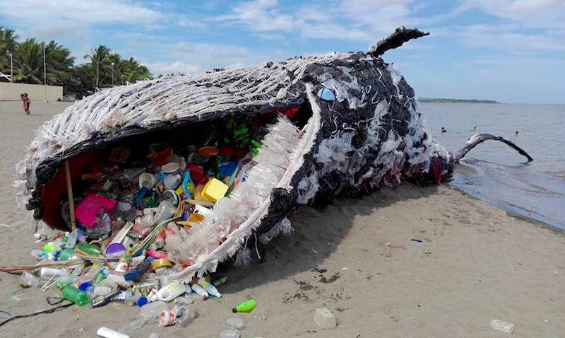 whale ocean bottle pollution - tech urdu
